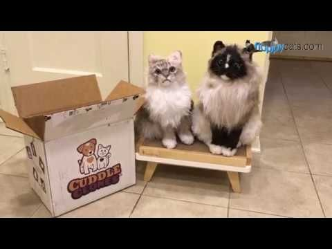 Cuddle Clones Product Review Coupon Code Custom Pet Stuffed Animals Buy Cuddle Clones Https Cuddlec Cat Lover Gifts Diy Best Cat Litter Cat Lover Shirt