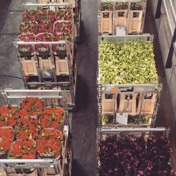 Flowers to be auctioned today... delivered to you tomorrow?! dutchauction #floraholland #passionforflowers #tallulahroseflowerschool #tallulahtravels