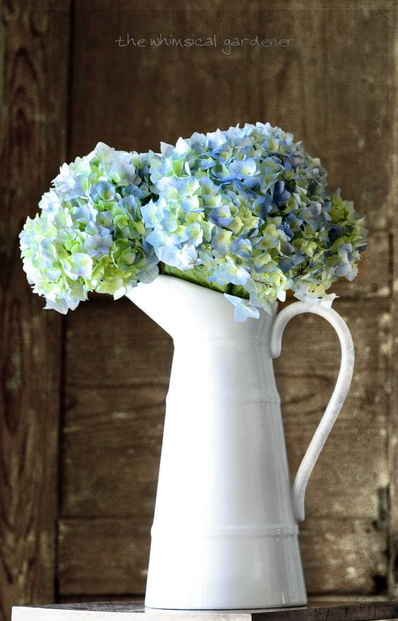 Hydrangeas in a simple white vase.