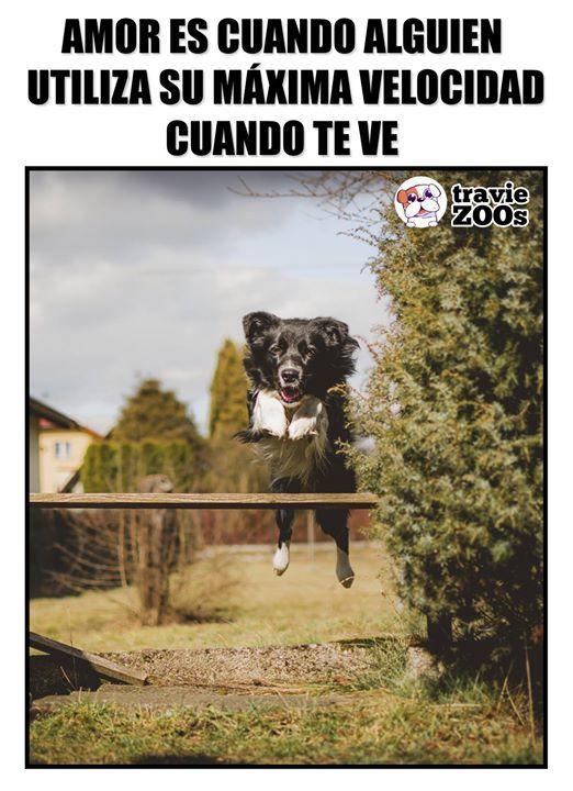 Firulais No Me Vayas A Tumb Perros Tristes Memes Animales Firulais