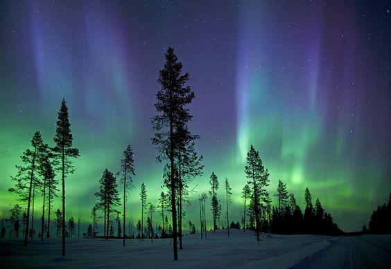 trees with kiruna aurora, sweden, by Antony Spencer