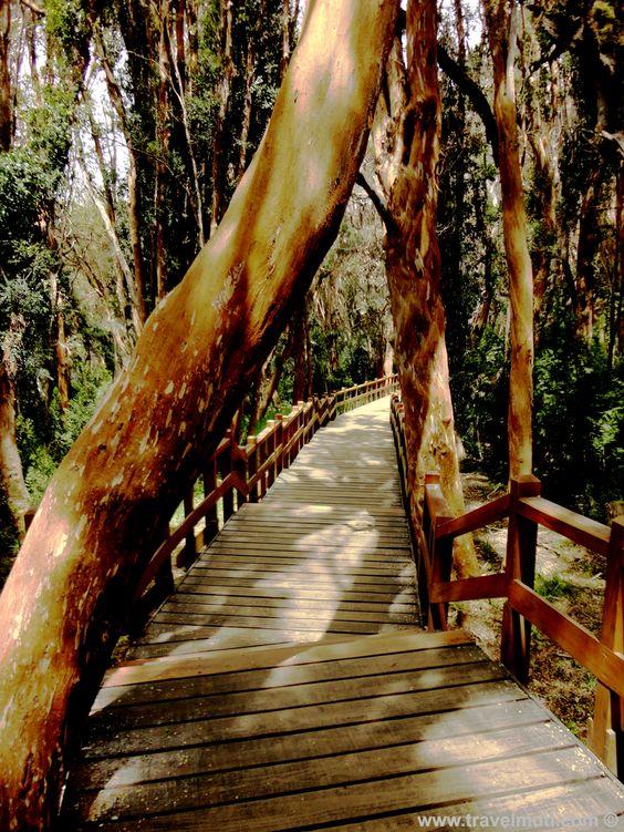 Bosque de Arrayanes - Villa la Angostura