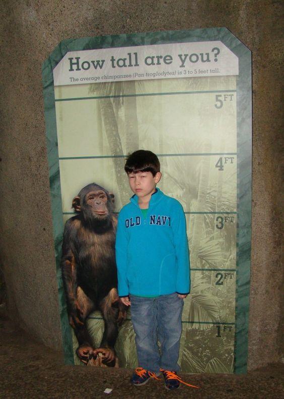 Zoo Boy Chimanzee Boy: