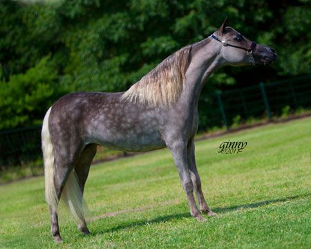 miniature horses | Los Arboles Secret Code