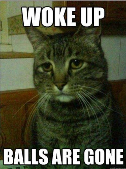 Grumpy Cat Camel Meme