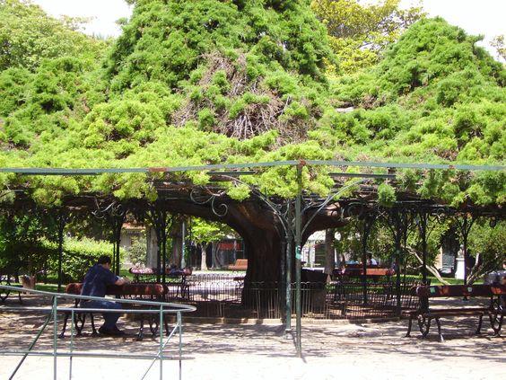 Lisboa, Jardim do Príncipe Real, C. Alvim