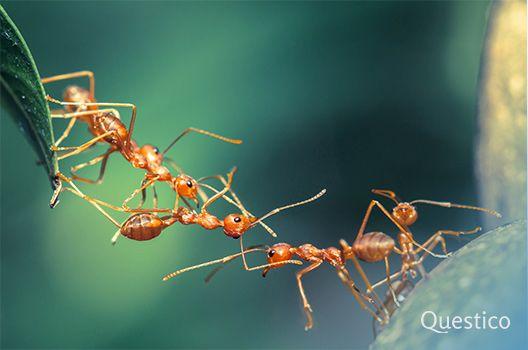 Traumdeutung Ameisen Ameisen Traumdeutung Ameisen Im Haus