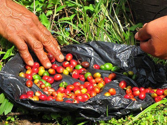 Guatemalan Coffee :o)