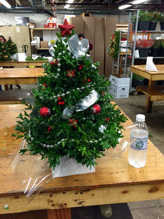Boxwood Xmas tree