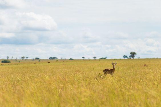 Freunde-von-Freunden-Uganda-5243