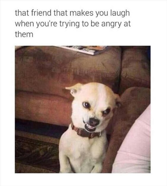 funny animal face laughing