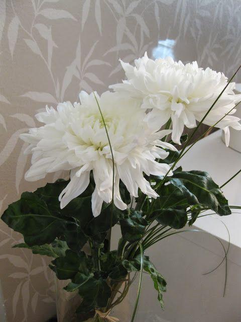 chrysanteemum - Kotivalossa