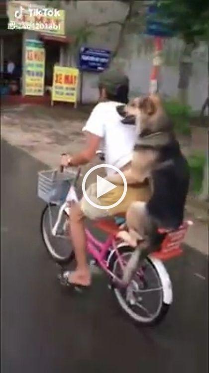 Cachorro andando de garupa na bicicleta