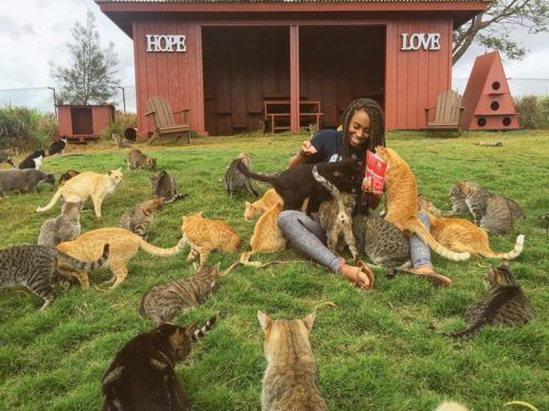 You can chill and be covered in hundreds of cats at this cat sanctuary in Hawaii