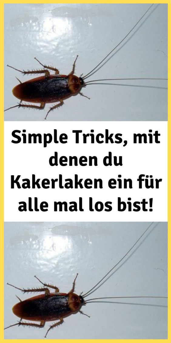 Simple Tricks Mit Denen Du Kakerlaken Ein Fur Alle Mal Los Bist Movie Posters Movies