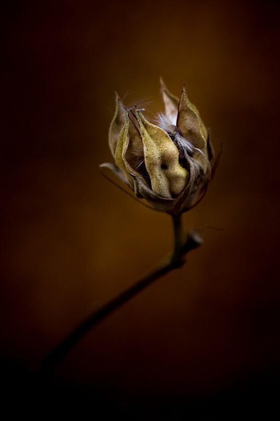 Dying With Hope Inside by paulbarson
