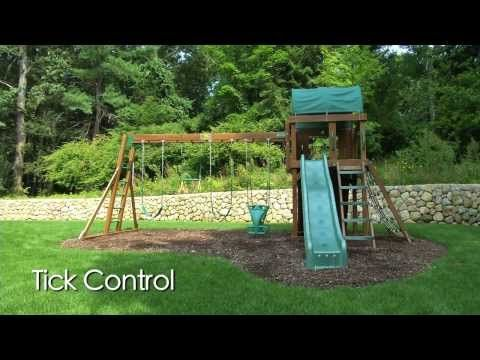Natural Ways To Get Rid Of Ticks In Your Yard