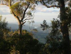 Lamington National Park. Queensland, Australia.