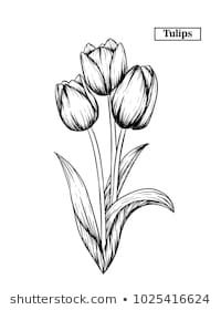 Moschiorini S Portfolio On Shutterstock Pencil Drawings Of Flowers Flower Sketches Flower Sketch Pencil