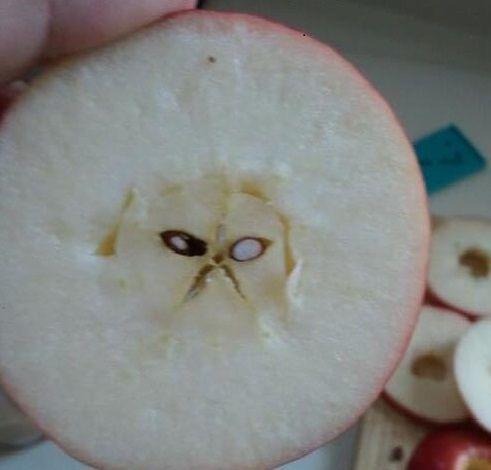 Grumpy cat in my apple - Imgur