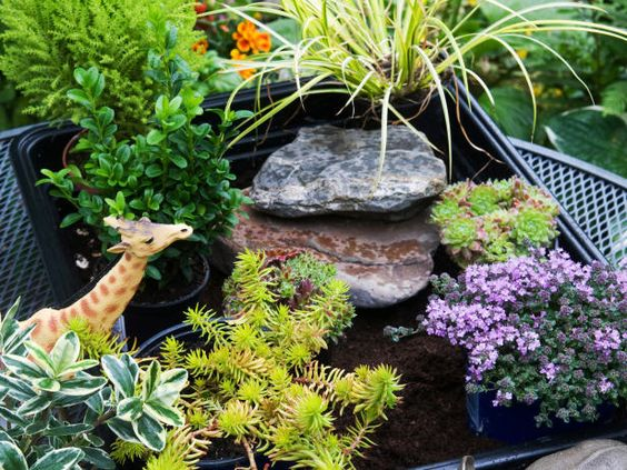 Arrange Landscape for Miniature Garden, fairy garden, miniature garden, animals