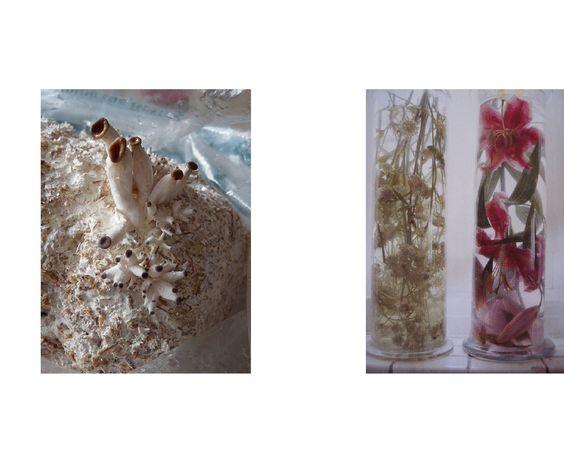 Vera van het Hof 2009  Image on the right M. Vogelezang