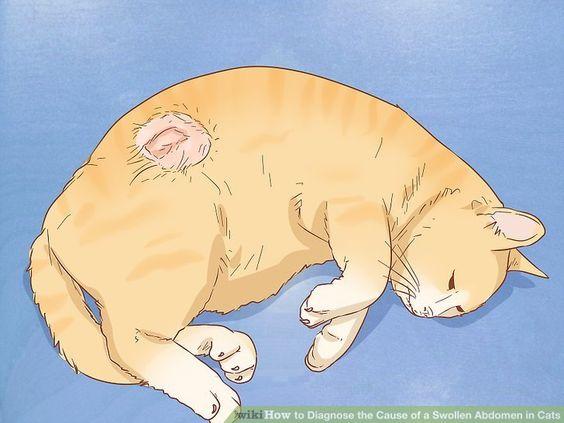 Wie Kann Man Die Ursache Eines Geschwollenen Bauches Bei Katzen