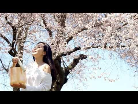Cherry Blossom Pagoda Japanese Folk Cherry Blossom Sakura Cherry Blossom
