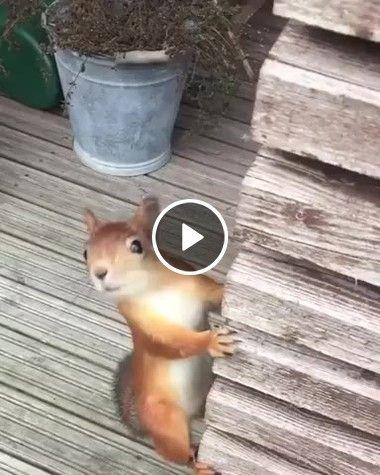Ratinho está procurando por comida