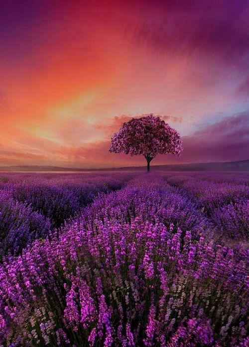 Purple Beautiful Landscapes Beautiful Nature Amazing Nature