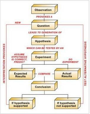 hypothesis flow chart   edumcated   pinterest   scientific method    scientific method flow chart