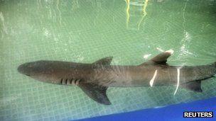 Shark dies in backyard pool for KMART commercial shoot :(