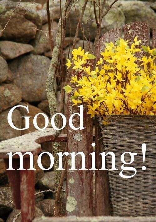 38 Good Morning Flower Images For Free Download Hd Pics Good Morning Flowers Good Morning Images Good Morning
