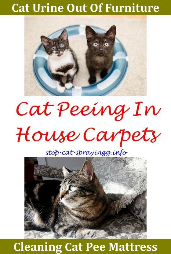 Cat Spray Baking Soda Cat Pee Watches Natural Cat Pee Cleaner Male