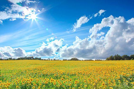 永遠に続くような黄色い絨毯が綺麗すぎる!北海道屈指の絶景『美瑛町のひまわり畑』 | きっかけは、絶景から。 wondertrip[ワンダートリップ]