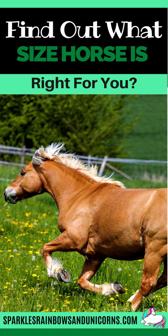 When you decide that you want to buy or lease a horse, you will probably ask yourself 'What size horse is right for me?'  Maybe you are just curious what size horse fits you best.Generally you can ride horses in a  range of sizes and be okay. However it's possible to be too big or  small for a horse as well. In this post you'll figure out what the ideal  horse size range is for you.  So how do you figure out what size horse is ideal for you? Keep reading...