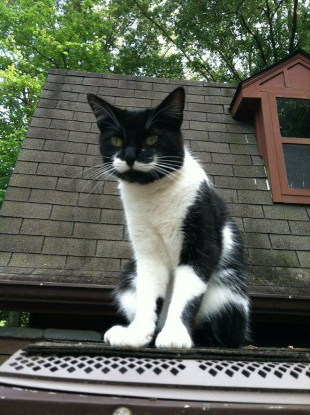 「王様ヒゲ」を持つ猫vol.7 – 猫ジャーナル