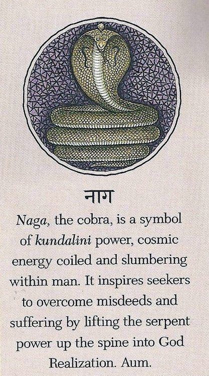 Naga, the cobra, is a symbol of kundalini power, cosmic energy coiled and slumbering within man.