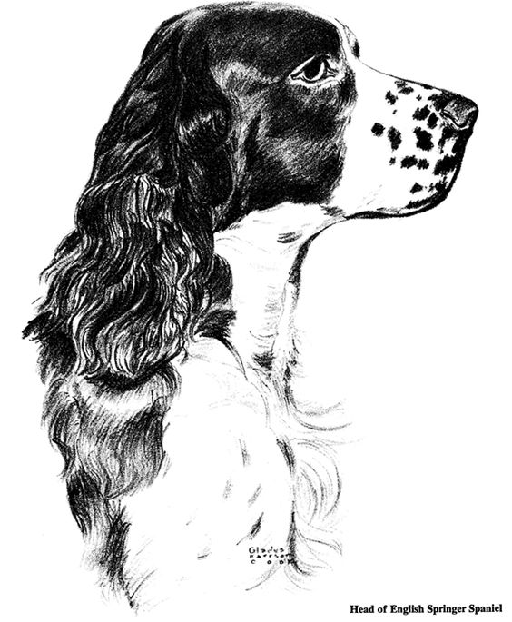 springer spaniel coloring pages - photo#25