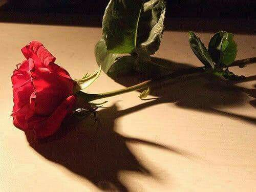 مع كل ليل يمرني طيف حبك وأخذه بـ أحضاني وأقبل اياديه واجلس أردد له أحبك أحبك كنه طفل زعلان مني واراضيه Beautiful Flowers Plant Leaves Red Roses