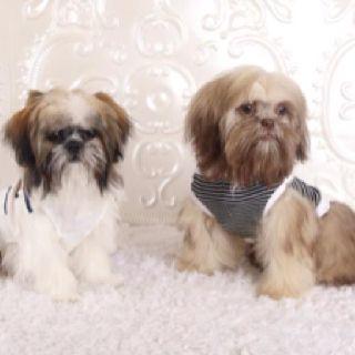 Teddy & Tessa