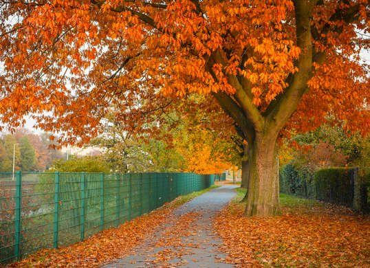 10 Of The Best Trees For Any Backyard Backyard Trees Large