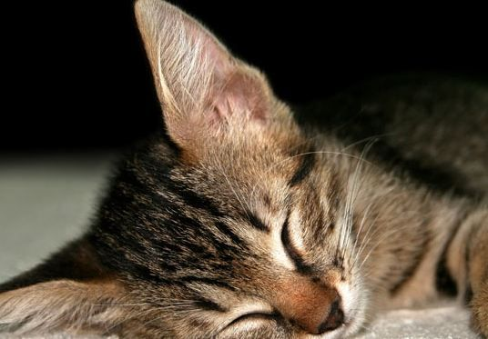 How Many Hours A Day Do Cats Sleep In 2020 With Images Cat Sleeping Cats Pet Care