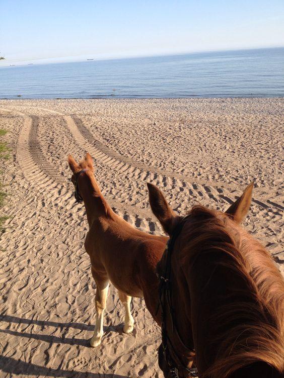 Beach horse riding foal