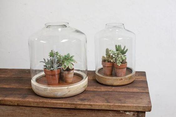 Cactus Crocus