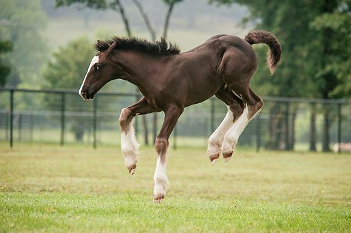 Bucking foal | Animals | Pinterest | Gypsy and Search