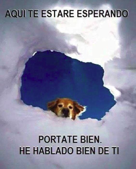 """Lo que me gustaría que mi perro fallecido estuviera """"pensando"""" ahora mismo:"""