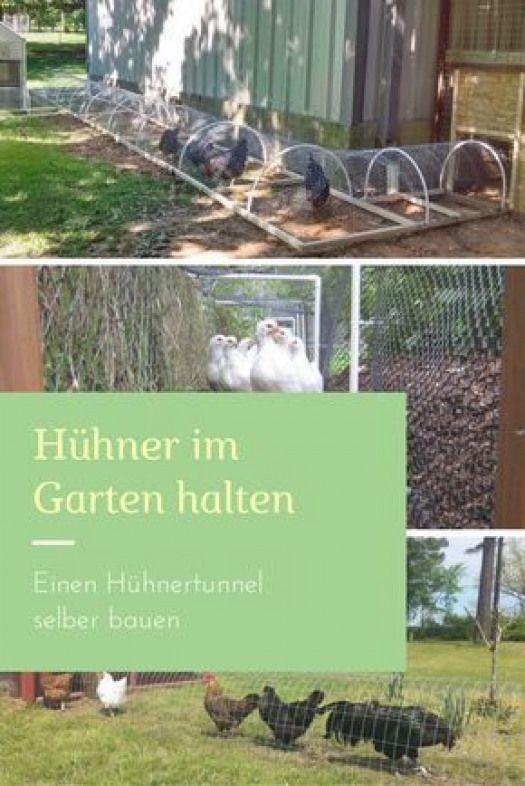Wer Huhner Im Eigenen Garten Halten Will Muss Einige Voraussetzungen Erfullen Neben Dem Festen Huhnerstall Ist Der Grun Chicken Tunnels Chickens Chicken House