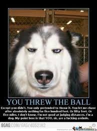 annoyed husky meme - photo #35