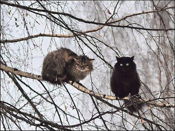 Уже коты прилетели😊